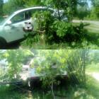 В Пензе легковушка спряталась в деревьях каштана