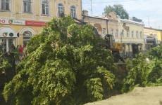 В мэрии Пензы прокомментировали уничтожение лип на улице Московской