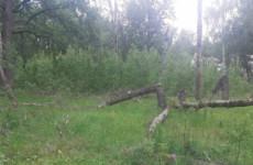 По факту смерти мужчины в лесу в Пензенской области начали проверку