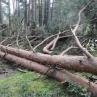 В Пензенской области браконьеры вырубили 17 деревьев