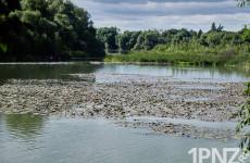 Большая катастрофа маленькой реки. Что происходит на «Маяке», и кто на самом деле виноват в загрязнении старого русла Суры