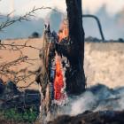В Пензенской области за сутки произошло 11 пожаров