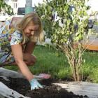 На Фонтанной площади высадили 56 саженцев деревьев и кустарников