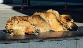 В Пензе обострилась ситуация с популяцией бродячих собак