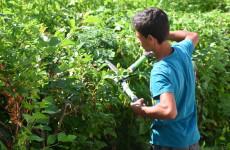 В Пензе получат работу более 200 трудных подростков