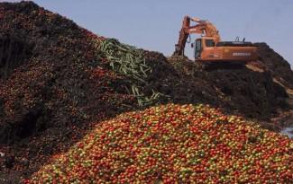 В Пензе уничтожат 300 кило санкционных яблок