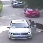 В сети появилось видео смертельного нападения тигра на посетительницу сафари-парка