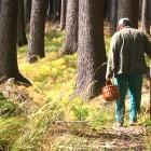 В Кузнецке обнаружили тело грибника