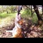 Бойцовская собака содрала с девочки скальп и откусила уши
