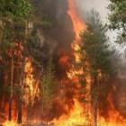 Рослесхоз проследит за пожарами в Пензе
