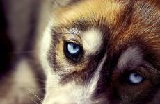 SKM продал здание для бездомных собак ООО «Азия Цемент»?