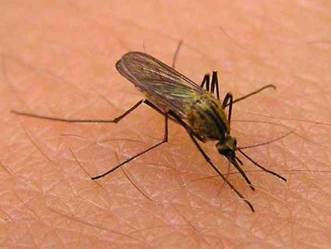 Женщине ампутировали три конечности из-за комариного укуса