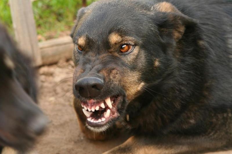 ВПодмосковье найден труп пенсионерки сранами отукусов собак