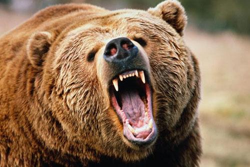 Медведь вырвался изклетки изагрыз мужчину вПензенской области