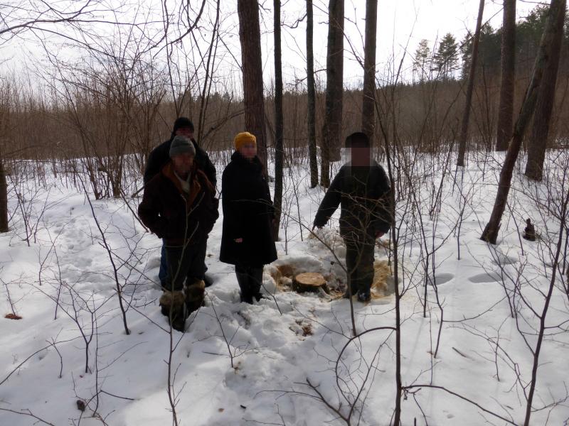 Гражданин Кузнецкого района подозревается внезаконной рубке деревьев на98 тыс. руб.