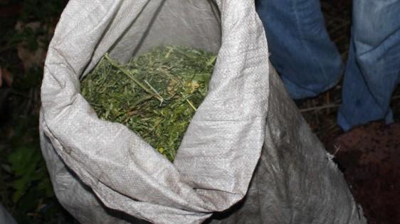 ВПензе возбуждено уголовное дело пофакту хранения наркотиков