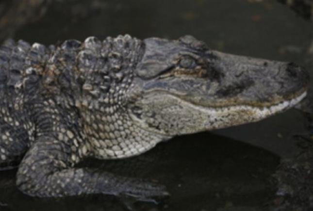 Напомойку вПензе выкинули крокодила, который скончался отмороза