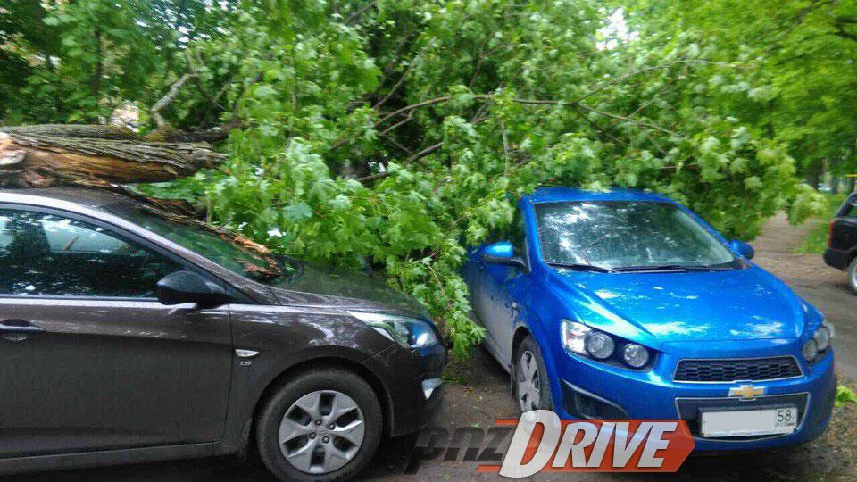 ВПензе из-за ветра старое дерево раздавило три автомобиля