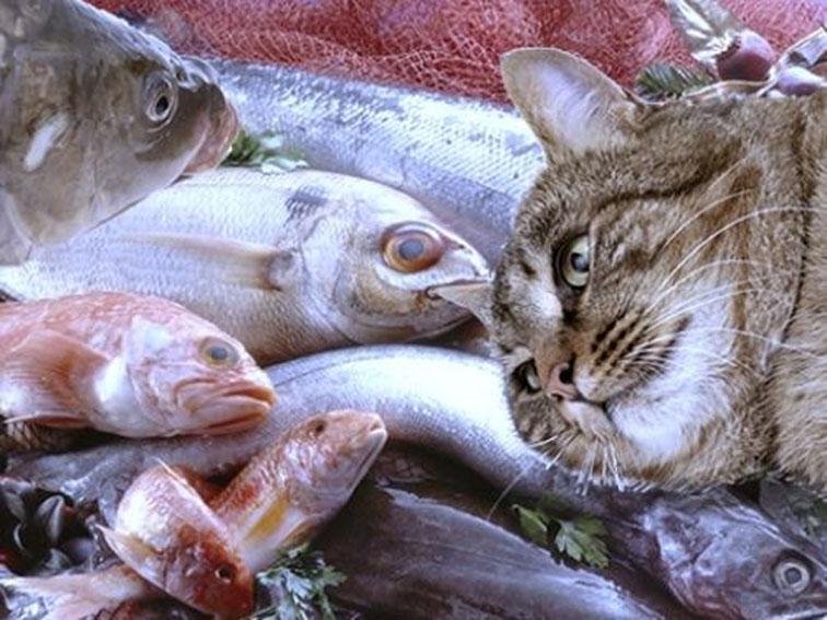 Впензенском магазине продавали водку без лицензии идержали кошек