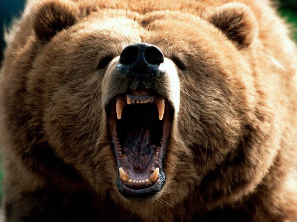 Медведь загрыз жителя Пензы вИркутской области