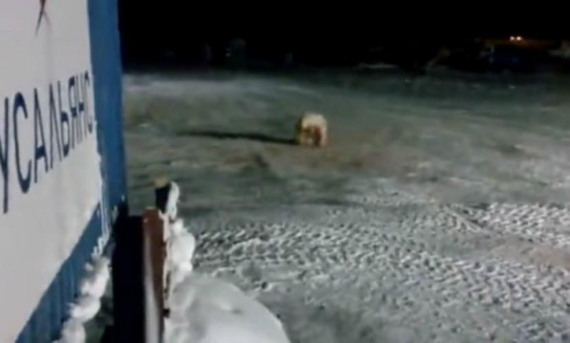 фото белой видео