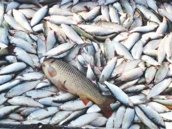 чупряково платная рыбалка рыба
