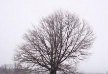 Погода в Пензе декабрь 2015
