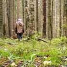 В Пензенской области пропал грибник