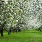 Компания «Сады Придонья» открыла новый сад в Пензенской области