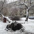 Пензенские экстренные службы отказались доставать автомобили из под упавшего дерева