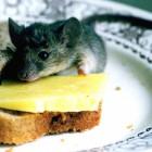 Заречному грозит эпидемия мышиной лихорадки?