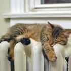 В Пензе в домах жителей Арбеково стало тепло