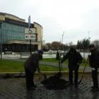 Горожанин: «Сотрудники ККЗ «Пенза» посадили деревья на парковке для инвалидов»