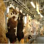 В Сосновоборском районе открыли цех по убою скота