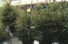Торговля елками принесет бюджету Пензы более миллиона рублей