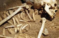 В Новгородской области нашли скелет летчика из Пензы