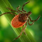 В Пензенской области от укусов клещей пострадали уже 19 человек