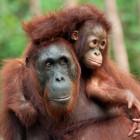 В пензенском зоопарке горожане смогут покормить с рук обезьян