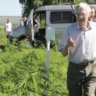 Ученый из пензенского НИИ поставил крест на развитии рынка медицинской марихуаны в России