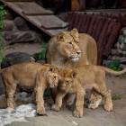 Пензенский зоопарк сменит режим работы