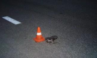 Под Пензой лихач на дорогом BMW сбил насмерть сразу двоих