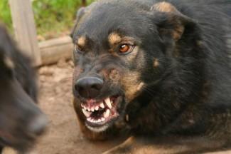 В подмосковном Королеве собака насмерть загрызла пенсионерку