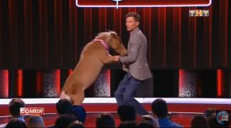 Комик и шоумен из Пензы Павел Воля станцевал с «собакой-конем»