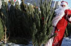 Где можно купить новогоднюю елку в Пензе? Полный список адресов елочных базаров