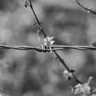 Забор между Крымом и Украиной построит организация из Пензенской области