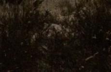 В лесу на ГПЗ пензенец встретил «диво-дивное»