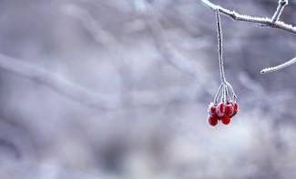 Какая погода ждет пензенцев 11 января?
