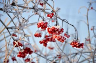 Пензенское МЧС опубликовало прогноз погоды на 14 января