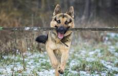 Пензенским школьникам продемонстрировали навыки служебных собак