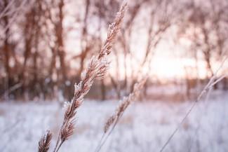 Завтра в Пензе ожидается до 24 градусов мороза